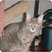 Adopt A Pet :: Ladybug - Chesapeake, VA