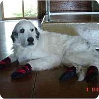 Adopt A Pet :: Sarah - Mesa, AZ