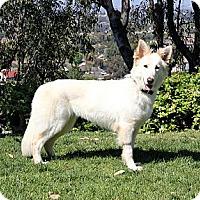 Adopt A Pet :: Emily - Laguna Niguel, CA