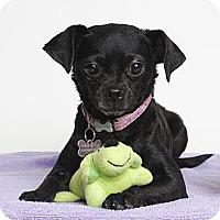 Adopt A Pet :: Francesca - Oakland, CA