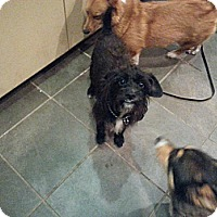 Adopt A Pet :: Cornelius - Freeport, NY