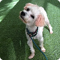 Adopt A Pet :: Stitch - Mission Viejo, CA