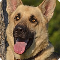 Adopt A Pet :: Dancer - Altadena, CA