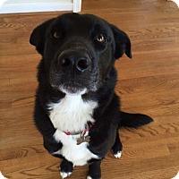 Adopt A Pet :: Kato - Richmond, VA