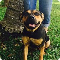 Adopt A Pet :: Keylin - Homestead, FL