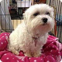 Adopt A Pet :: Ms. Bentley - Meridian, ID