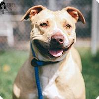 Adopt A Pet :: Kasey - Ventura, CA