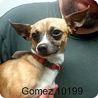 Adopt A Pet :: Gomez - baltimore, MD