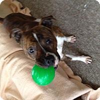 Adopt A Pet :: Loki - Glenview, IL
