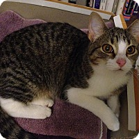 Adopt A Pet :: Cecily - St. Louis, MO