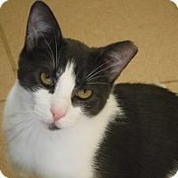 Adopt A Pet :: Pugsley - River Edge, NJ
