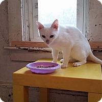 Adopt A Pet :: R.W. Triz - Putnam, CT
