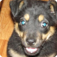 Adopt A Pet :: Laine - Rocky Mount, NC
