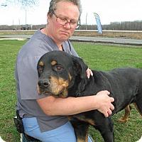 Adopt A Pet :: Cleo - Queenstown, MD