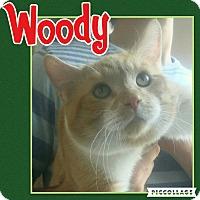 Adopt A Pet :: Woody - Scottsdale, AZ
