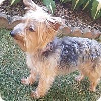 Adopt A Pet :: Mia 3374 - Toronto, ON