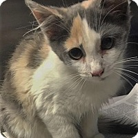 Adopt A Pet :: Lane - Chattanooga, TN