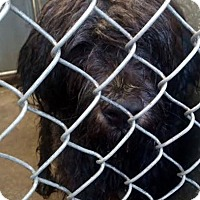 Adopt A Pet :: #328-16 - RESCUED! - Zanesville, OH