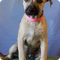 Adopt A Pet :: Brenna - Waldorf, MD