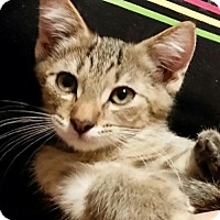 Adopt A Pet :: ♥ Robin ♥ - Middleburg, FL