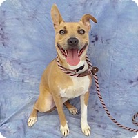 Adopt A Pet :: Tammy - Hawthorne, CA