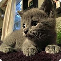 Adopt A Pet :: Sunny - Merrifield, VA