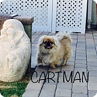 Adopt A Pet :: CARTMAN - SO CALIF, CA