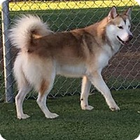 Adopt A Pet :: Arion - WAGONER, OK