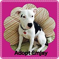Adopt A Pet :: Emjay - Tomball, TX