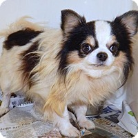 Adopt A Pet :: FRANKIE - Anderson, SC