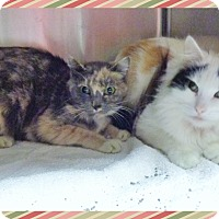 Adopt A Pet :: MINDY & MISSY-available 12/01 - Marietta, GA