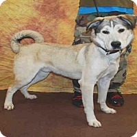 Siberian Husky Mix Dog for adoption in Louisville, Kentucky - A605445