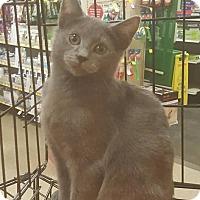 Adopt A Pet :: Townsend - Griffin, GA