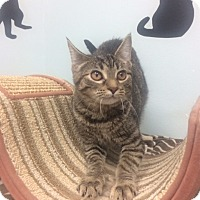 Adopt A Pet :: Janet - Chicago, IL