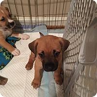 Adopt A Pet :: Florence - Alpharetta, GA