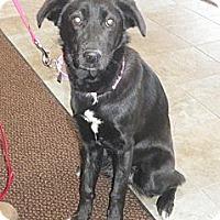Adopt A Pet :: Zoe - Park Ridge, NJ