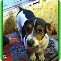 Adopt A Pet :: Frank Nemo - Staunton, VA