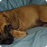 Adopt A Pet :: Grant - Jarrettsville, MD