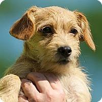 Adopt A Pet :: MiMi - Providence, RI