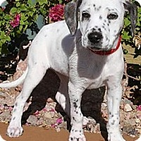 Adopt A Pet :: Monica - Gilbert, AZ