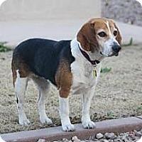 Adopt A Pet :: Sophie Rae - Phoenix, AZ
