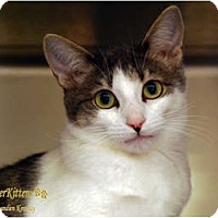 Adopt A Pet :: Gwyneth - Encinitas, CA