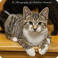 Adopt A Pet :: Foley - Byron Center, MI