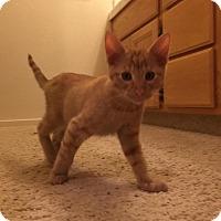 Adopt A Pet :: Obi - Sacramento, CA