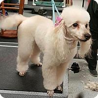 Adopt A Pet :: Chloe - Costa Mesa, CA