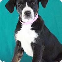 Adopt A Pet :: Octavia - Waldorf, MD