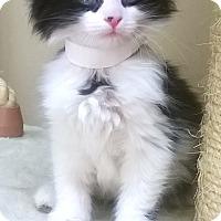 Adopt A Pet :: Cheryl - Oswego, IL