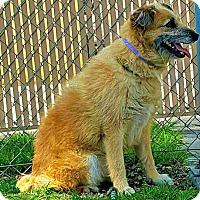 Adopt A Pet :: Maggie - Redondo Beach, CA