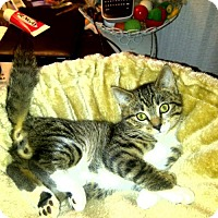 Adopt A Pet :: Toodles(KJ) 11.9.12 - Orlando, FL