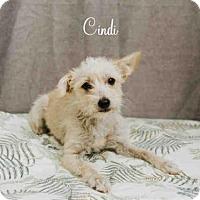 Adopt A Pet :: *CINDI - Sugar Land, TX